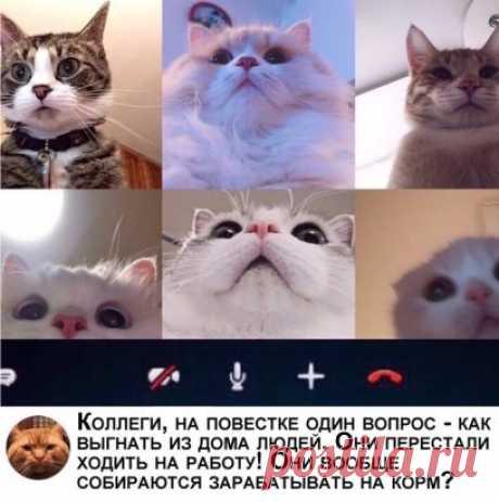 Кошки в самоизоляции! Не забываем подписаться и ставить лайки!
