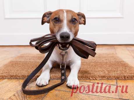 Почему не стоит использовать строгие ошейники для собак? | nashi-pitomcy.ru