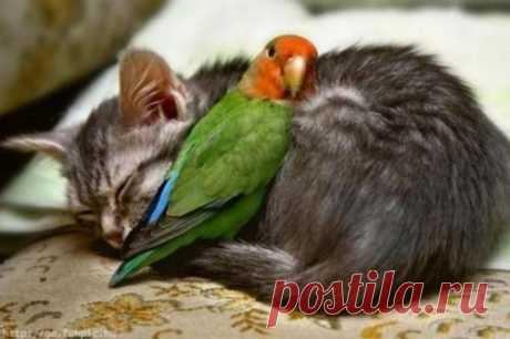 Ещё 25 замечательных примеров необычной дружбы между животными, у которых нам стоило бы поучиться . Тут забавно !!!