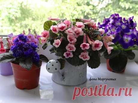 Минисинингии зацветают после посева через 4 месяца и цветут практически круглый год при достатке света и тепла! 🌸