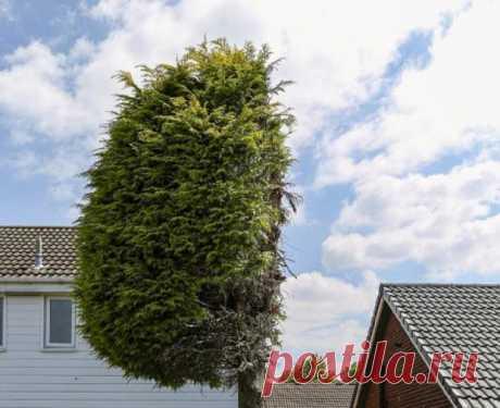 Соседи из Великобритании поделили пополам дерево, стоящее на границе двух домов