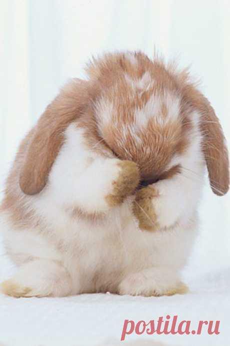 Cute baby animals - sofeminine.co.uk