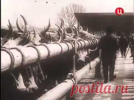 Пётр Столыпин  Выстрел в антракте