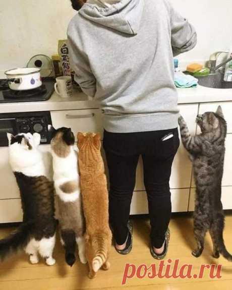 Кушать скоро будем?!