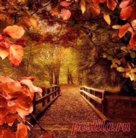 Душа, как осень… Кто-то ходит по аллее,  Листву в букеты собирает и поёт…  А кто-то с зонтиком, одевшись потеплее,  От нежной осени дождей холодных ждёт…   Ирина Самарина-Лабиринт