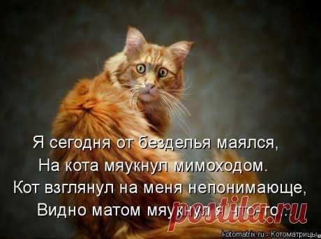 Котоматрица: Я сегодня от безделья маялся, На кота мяукнул мимоходом. Кот взглянул на меня