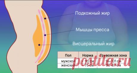 Внутренний жир: как с ним справиться? 10 работающих правил | 7 минут на красоту | Яндекс Дзен