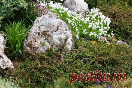 10 идеальных растений для солнечного рокария  Каменистый сад или рокарий — желанный элемент ландшафтного дизайна дачи. Для многих пользователей нашего сайта загородный участок — это не только грядки, плодовый сад, ягодник, но и место отдыха, ост…