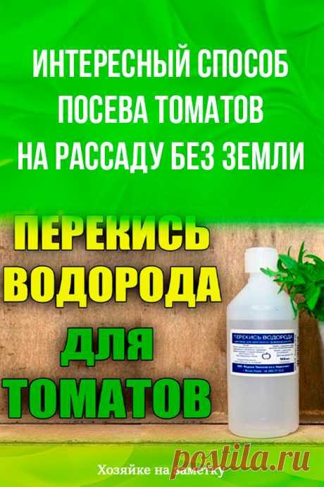 Интересный способ посева томатов на рассаду без земли
