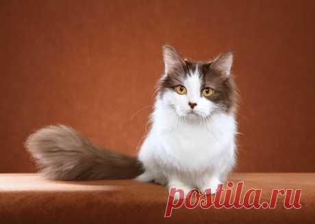 7 самых дружелюбных и общительных пород кошек | PetTips