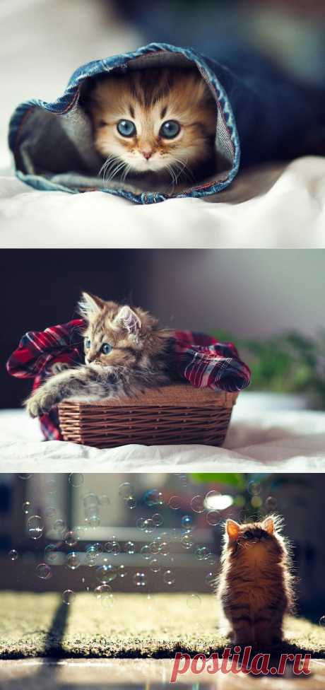 Самый милый котенок на Земле : НОВОСТИ В ФОТОГРАФИЯХ