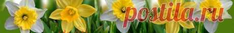 Лунный посевной календарь садовода - огородника на 2016 год | Календарь для зоны Урала и Западной Сибири