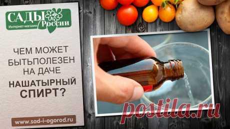 Нашатырный спирт: применение на даче