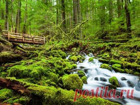 Красивейшие леса нашей планеты, от которых захватывает дух