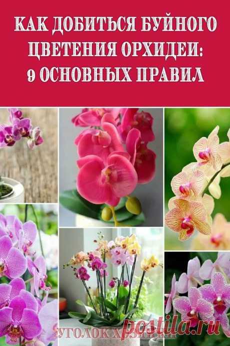 Как же добиться ее цветения? Просто соблюдайте эти 9 правил по уходу за растением.