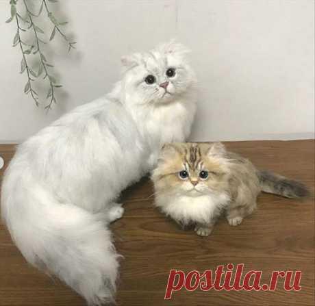 Японская мастерица валяет кошек,которые выглядят, как живые.   Забытые истории.   Яндекс Дзен