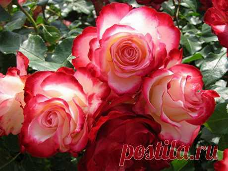Фото цветы и букеты