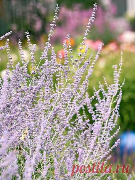 Растения для тяжелых глинистых почв