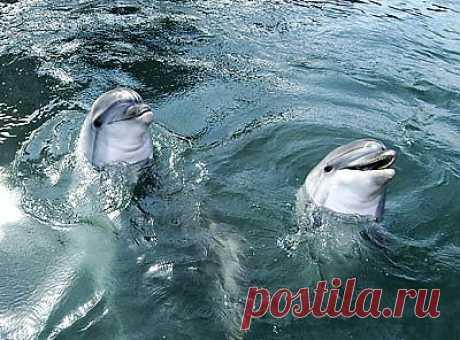 ::: Черное море ::: Дельфины