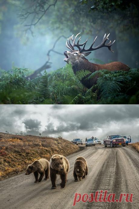 Лучшие фото от National Geogrphic за январь — Наука и жизнь
