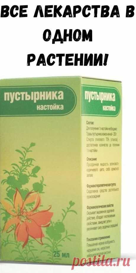 Все лекарства в одном растении! - Счастливые заметки