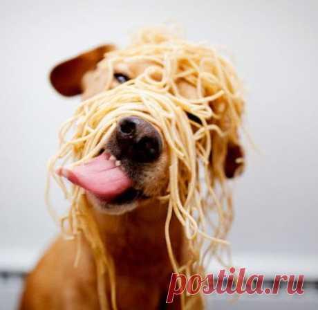 25 причин не заводить собаку