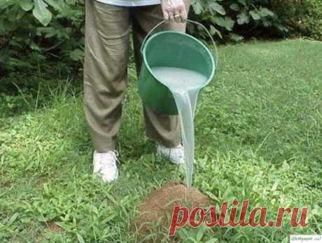 Избавляемся от муравьев навсегда