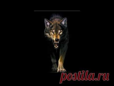 Выживая с волками.