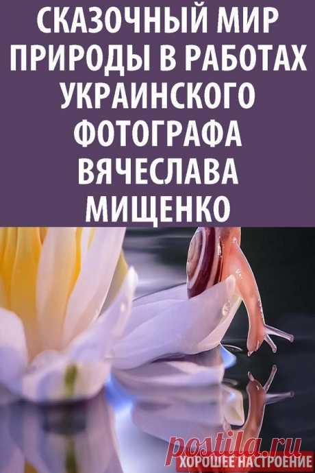 Сказочный мир природы в работах украинского фотографа Вячеслава Мищенко