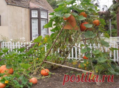 Арка из тыквы соседям на зависть | ЦВЕТАНА | Яндекс Дзен