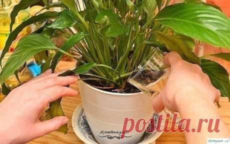 Чем подкармливать домашние растения — Садоводка