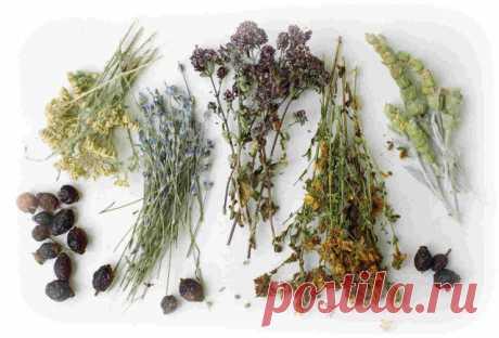 Этот простой рецепт потомственного травника укрепит кости и восстановит хрящи и суставы!