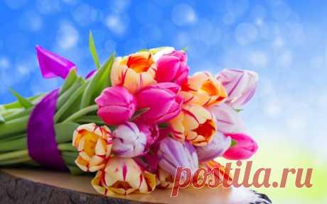 Обои на рабочий стол Цветы:Nature, Flowers, Flower, Colorful, Tulips, Bouquet - скачать бесплатно.   Обои-на-стол.com