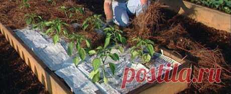 10 reglas de la cosecha buena del pimiento — 6 sotok