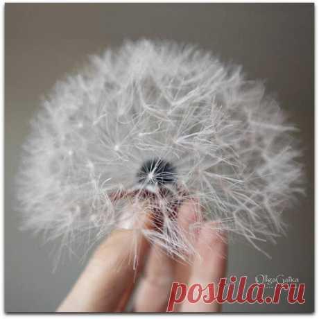 Волшебные броши-одуванчики от OllgaGaika   Paradosik_Handmade   Яндекс Дзен