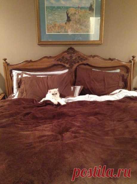 Наглые морды, которые присвоили себе хозяйские кровати
