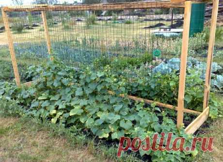 Шпалеры для огурцов своими руками – 7 вариантов изготовления Шпалеры – обязательные для выращивания вьющихся растений подпорки, которые повышают урожайность и устойчивость различных сортов.