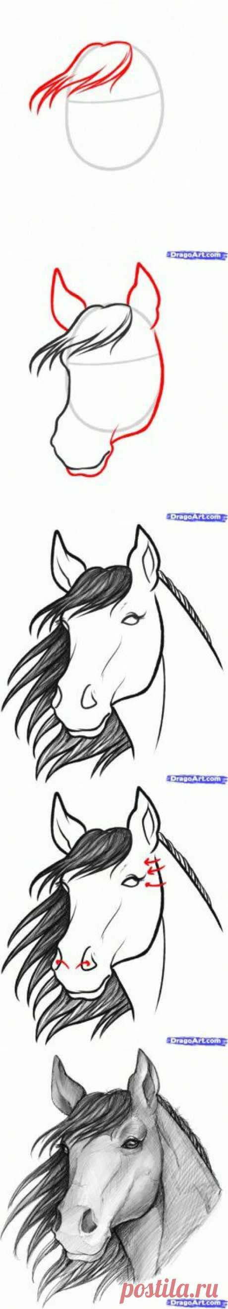 Как нарисовать лошадь.   Творческие мастер-классы по рукоделию и кулинарии.