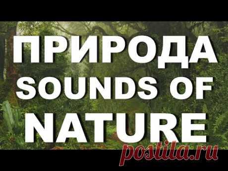 Релакс звуки природы пение птиц, шум деревьев, журчание ручья - YouTube  Звуки природы – это природный #релакс для души, это музыка для успокоения, это музыка природы для релаксации и успокоения, для расслабления. Здесь и пение птиц, шум деревьев,  журчание ручья.   Если Ваш малыш не может заснуть – эти звуки для сна малыша. Звуки природы как нельзя лучше всего подходят для успокоения Вашего малыша и для его спокойного сна.