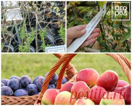 As it is correct to plant fruit-trees in the fall