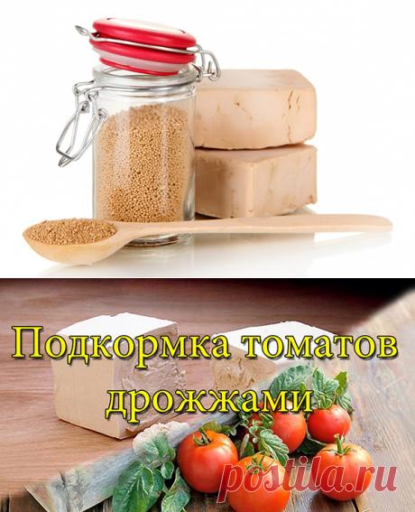 =Дрожжевая подкормка для помидор. 7 рецептов подкормки помидор дрожжами.  =Почему желтеют листья у огурцов.