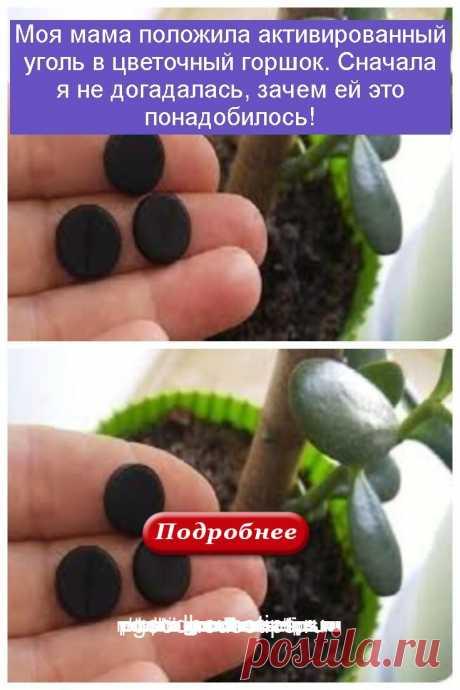 Моя мама положила активированный уголь в цветочный горшок. Сначала я не догадалась, зачем ей это понадобилось! - Коллекция домашних рецептов
