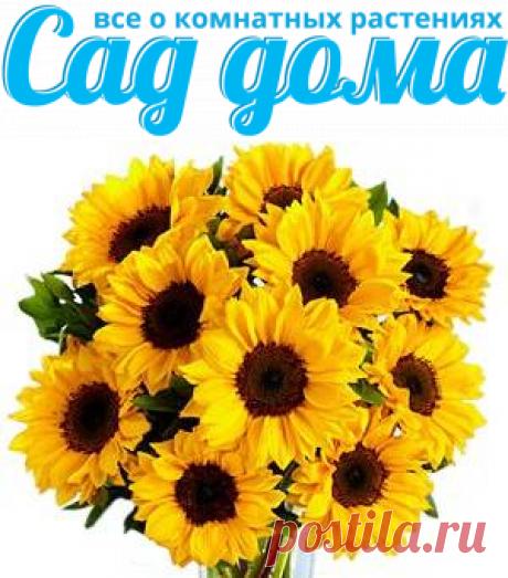 О популярных комнатных растениях с желтыми цветами, которые способны подарить атмосферу солнца в вашем доме.