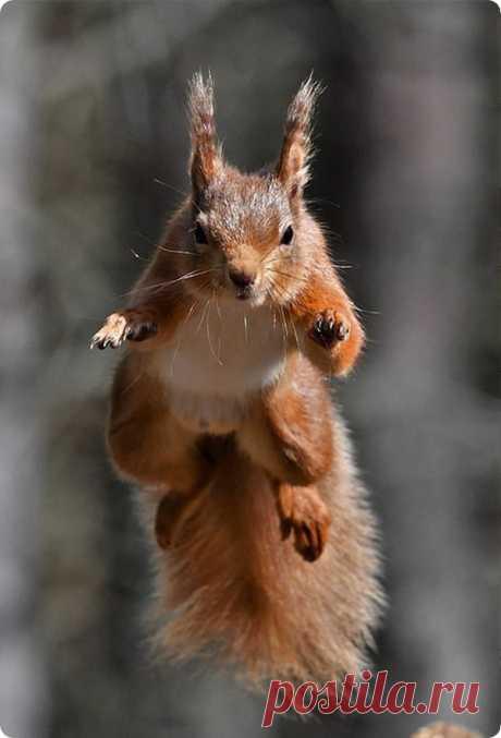 Белки в прыжке от фотографа Гэри Брюса - ZooPicture.ru