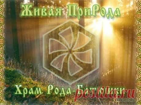 Блог — Славянская Культура | Общение с деревьями
