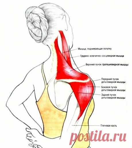 Трапециевидная мышца: точки напряжения и методы снятия боли — Полезные советы