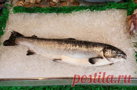 Определяю, является ли рыба свежей: научили друзья из Сахалина | Ponchik_Life | Яндекс Дзен