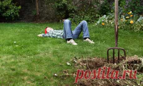 Сад и огород для ленивых: как облегчить работу на даче
