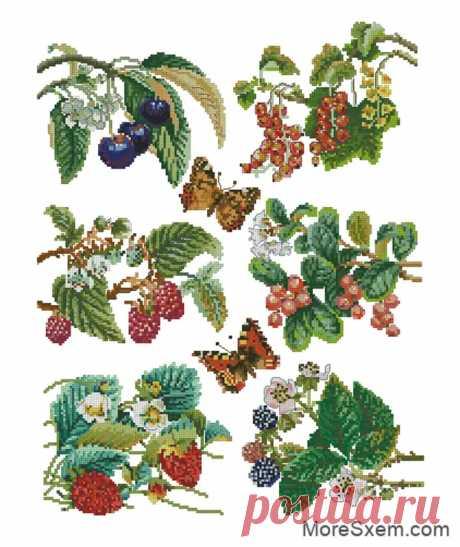 Ветки с ягодами - Домоводство - медиаплатформа МирТесен