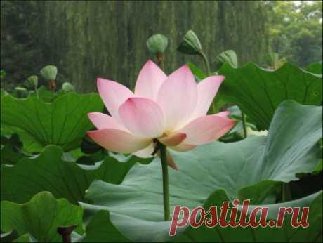 Эмили: семь тропинок к здоровью и счастью  Далай-лама XIV сказал: К счастью можно прийти двумя путями🌺 - Первый путь внешний. Приобретая лучшее жилище, одежду, окружение, мы можем в той или иной степени обрести счастье и удовлетворение. - Второй путь позволяет достичь счастья, духовно развиваясь. Внешнее счастье без внутреннего не может длиться долго🌺